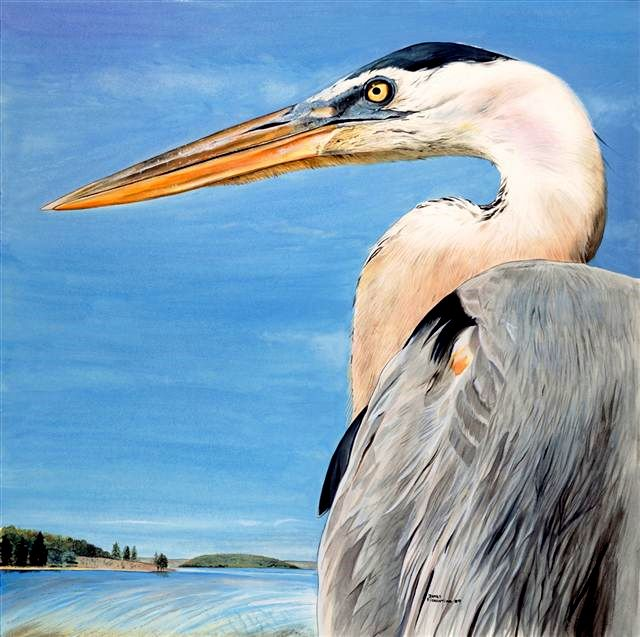 Blue heron 003