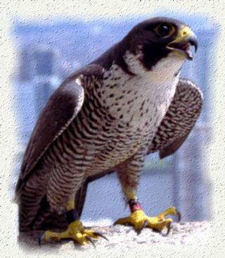 Jcp-birdpic2