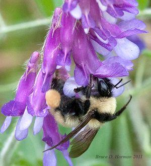 Bee-001