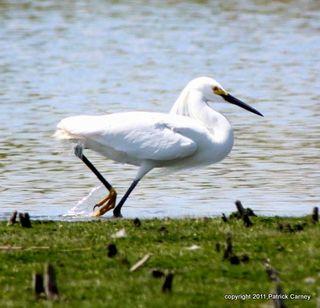 AudubonTripSkeetkillMarsh