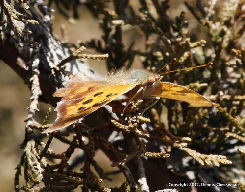 Butterfly in Feb