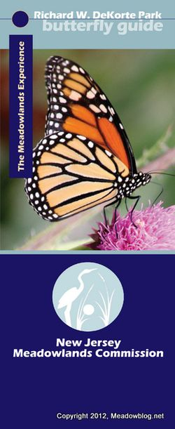 NJMC Butterflies