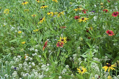 August 28_Wildflower Patch DeKorte_RTGeoghanSM_0529