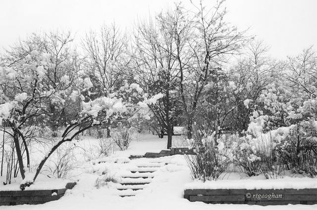 Mar 8_DeKorte Park SnowSM_ReginaTGeoghan_5852