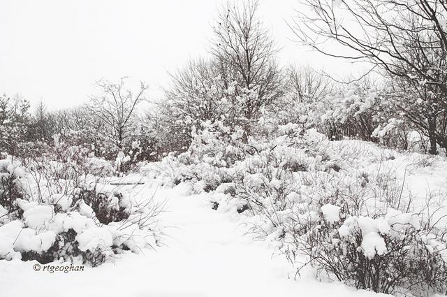 Mar 8_DeKorte Park SnowSM_ReginaTGeoghan_5864
