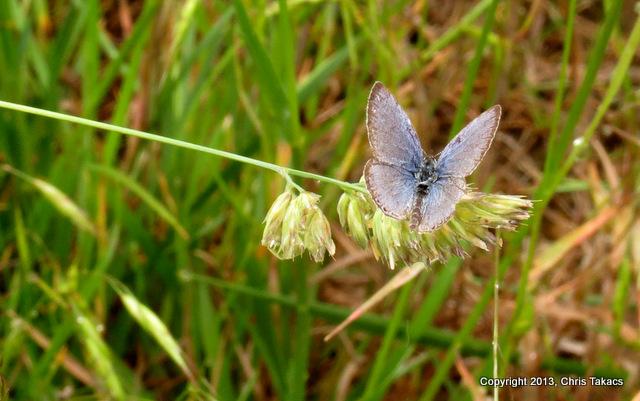 Butterfly 1 Kingsland