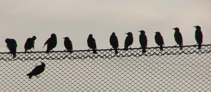Birds_on_wire