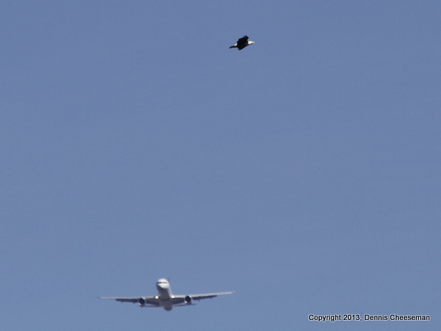 Eagle and distant Jet