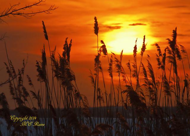 020414 V Sunset 013f RchrdDKorte Park Mdwlnds NJ Winter 020414 OK FLICKR-001