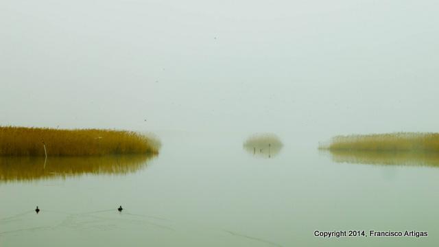 morning_ducks_2-001