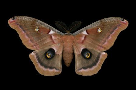 polyphemus-jim-des-rivieres_imagelarge