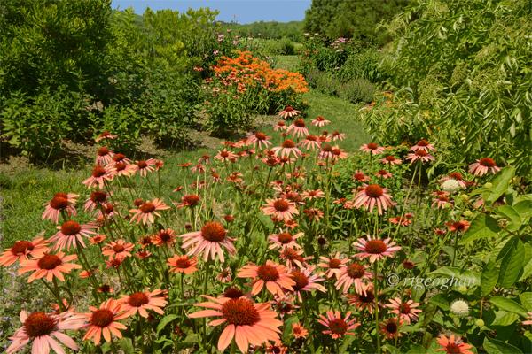 July 1_Butterfly Garden-DispRoadSM_3235