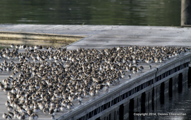 pier of pipers