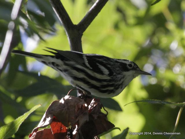 a warbler