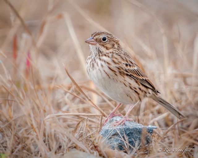 Roy Sparrow