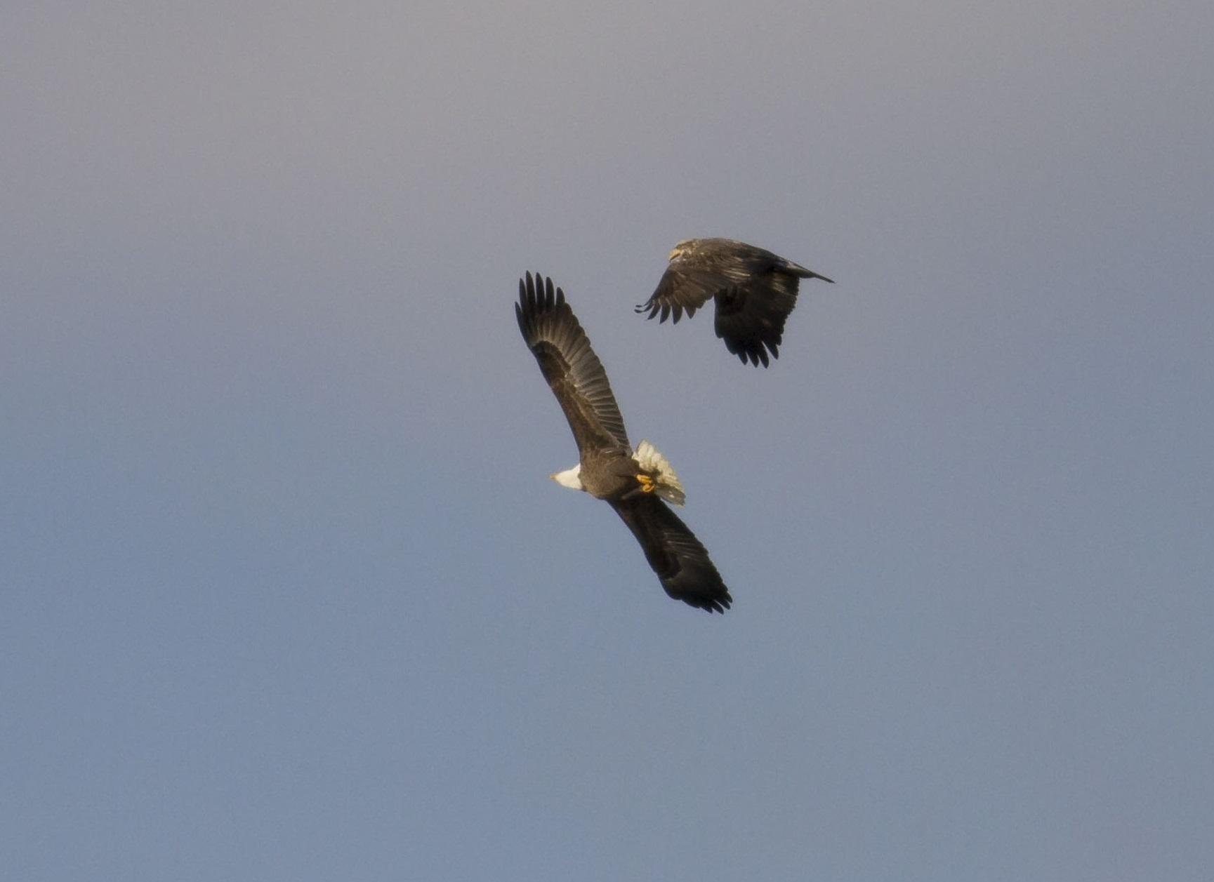 Homcy eagle 2