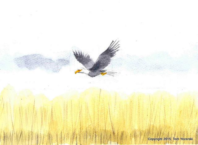 Tom Yezerski Bald Eagle