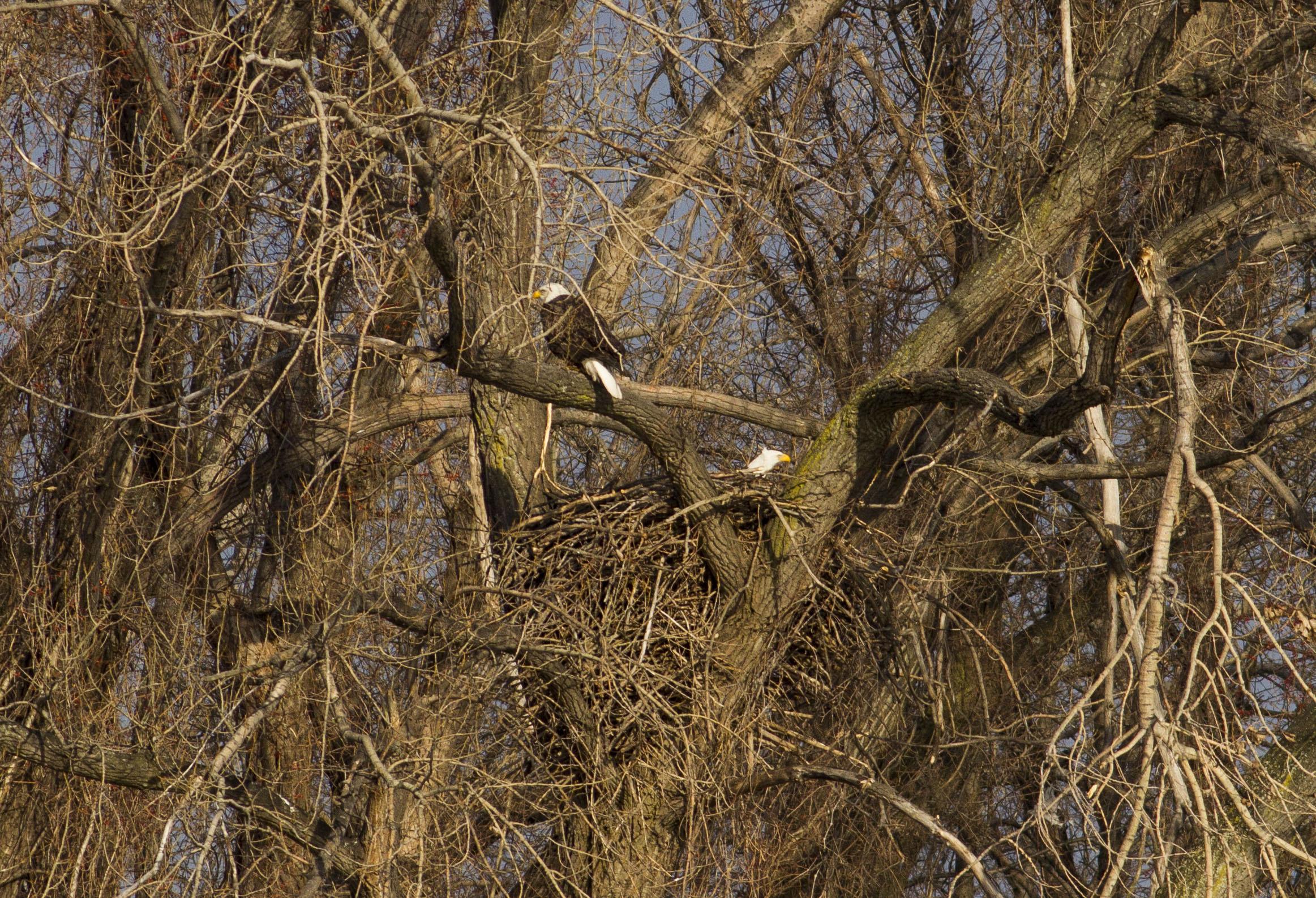 homcy eagle1