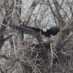 eagle nest at ridgefield park by JW