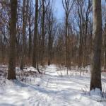 losen slote trail by JW