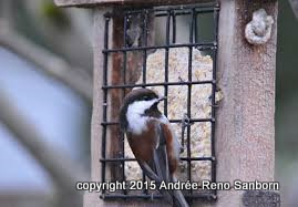 suet feeder copy