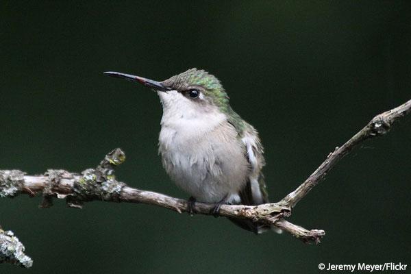 Hummingbird nature conservancy