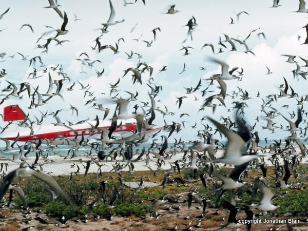 birdstrike jonathan blair