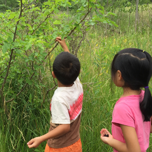 Foraging for mulberries. Photo: LCameron/NJSEA