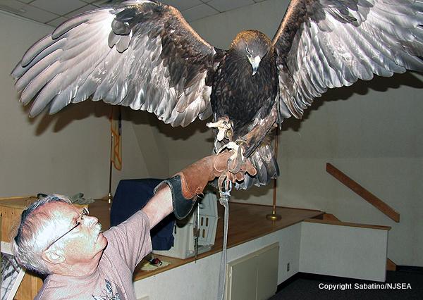 Streeter-GoldenEagle-wingspan smlgc