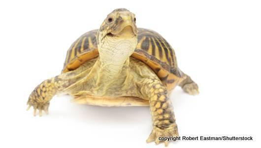 turtles-lead