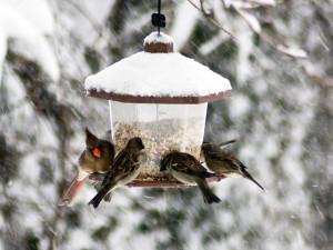 Bird_Feeder