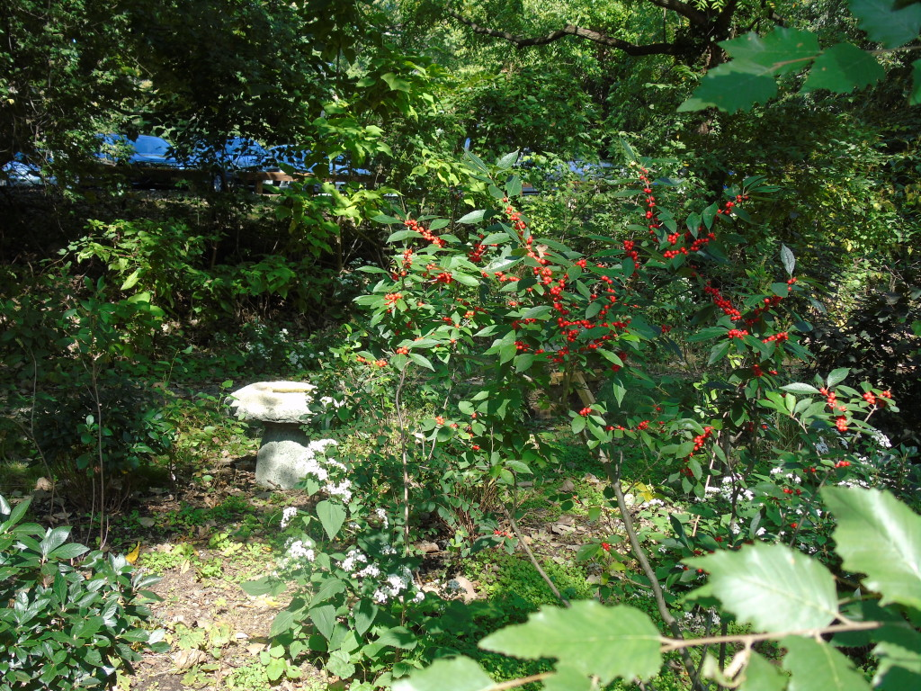 TCC Bens garden oct