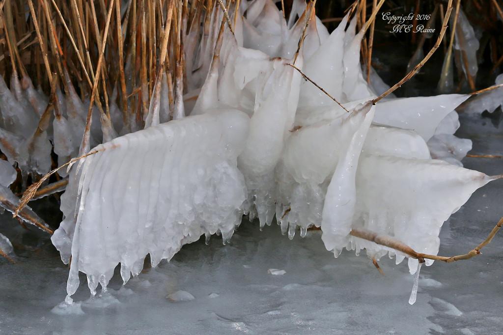 Image result for winter at dekorte park