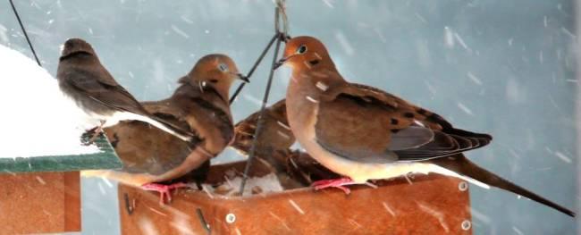 birdy 30