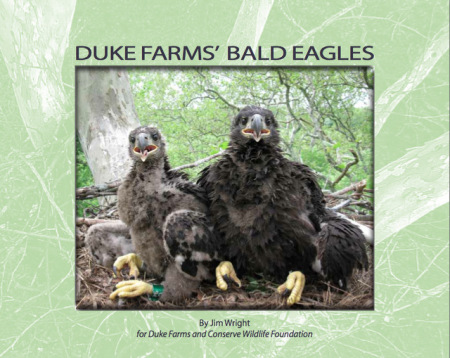 df-eagle-e-book
