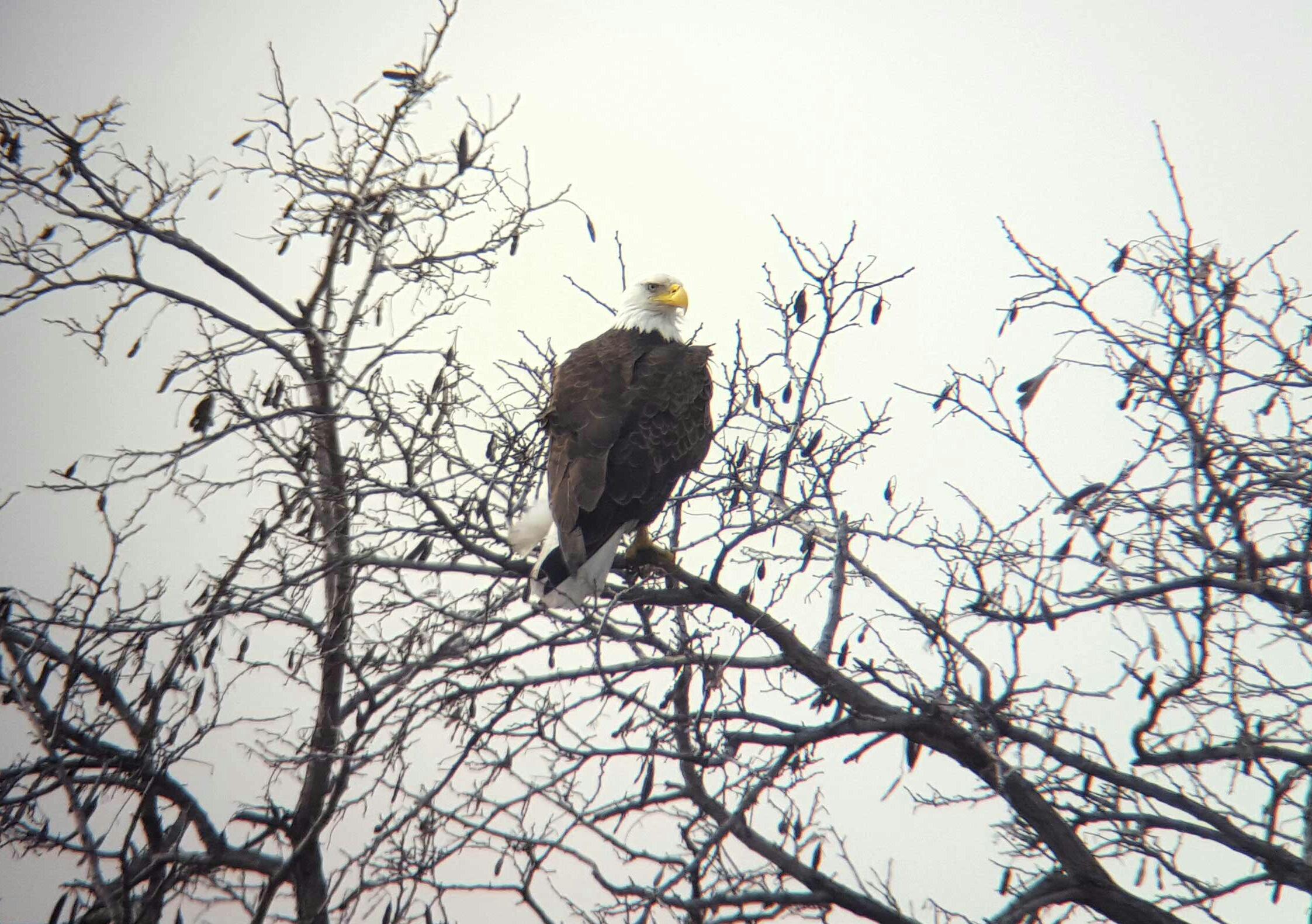 Takacs Eagle Transco 3.23.16