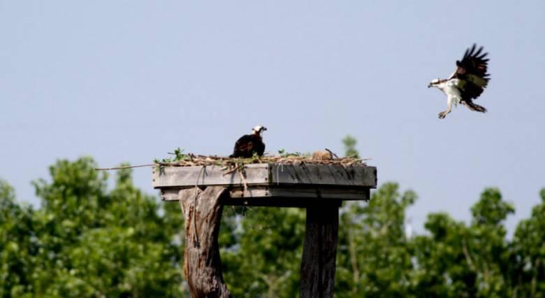 jims osprey
