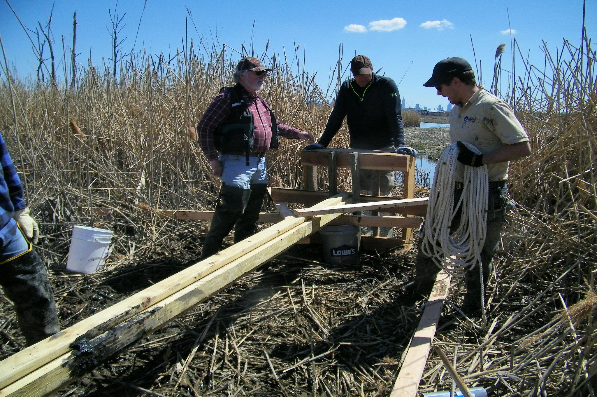 Osprey nest construction3