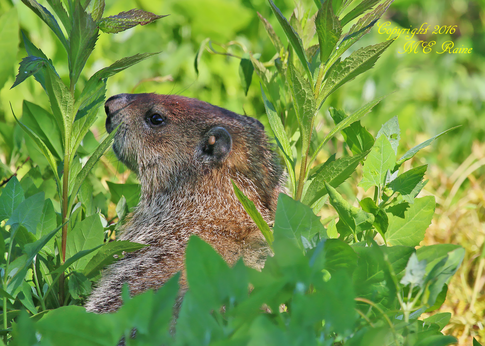 Groundhog Mill Creek Marsh