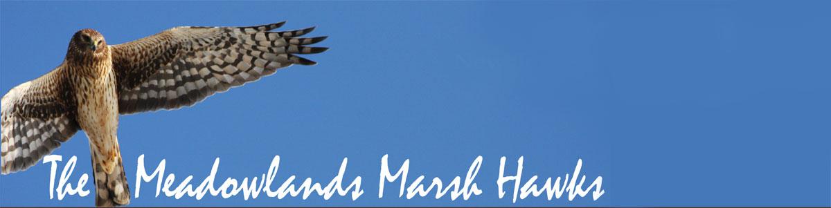 marsh-hawks-no-bcas