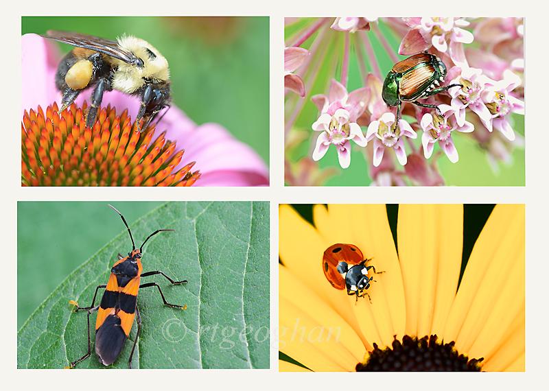 DeKorte Insects 7.7.16 Regina Geoghan
