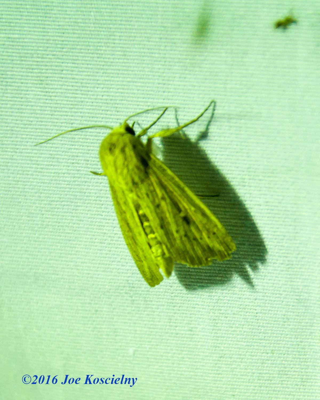 DeKorte Moth Night-4
