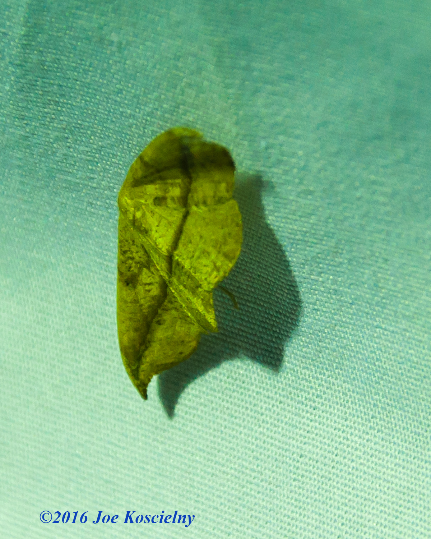 DeKorte Moth Night-5
