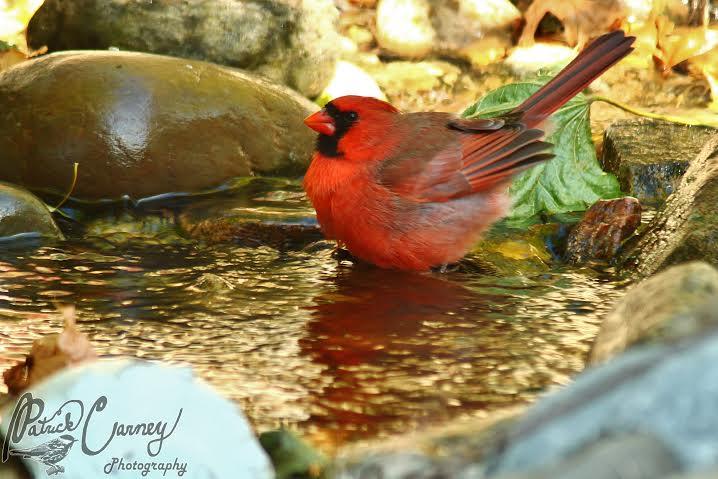 water cardinal 2