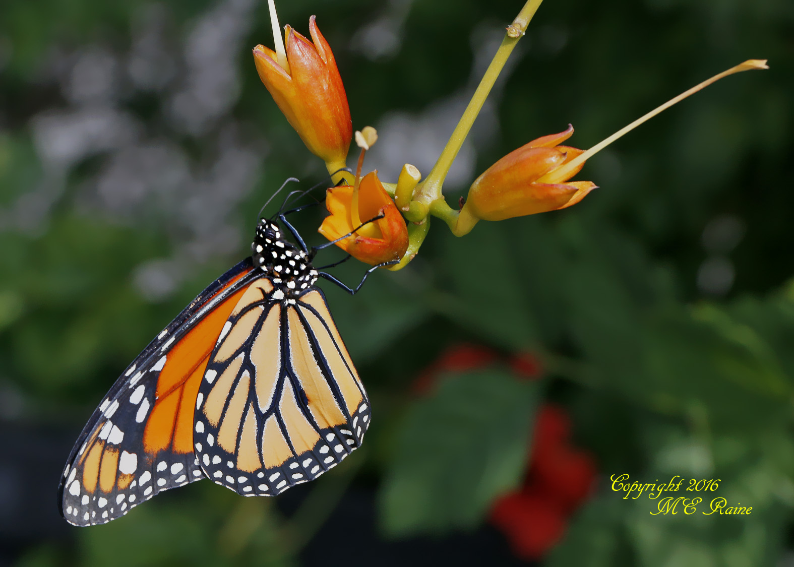 monarch-home-released-3