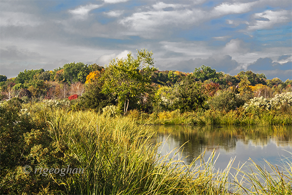 A view from a path in the Mill Creek Marsh area of the New Jersey Meadowlands of autumn toned marsh grasses and shrubs and the trees of Schmidt's Woods in the background.