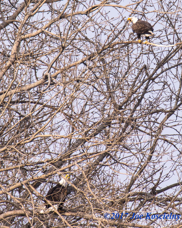 eagles-koscielny-1-8-17