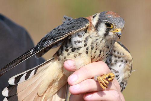 Bird banding pic