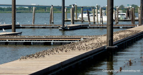 RBP Birds at the Marina 002