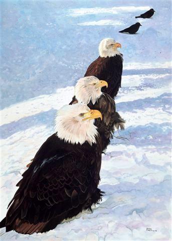 Eagles 002